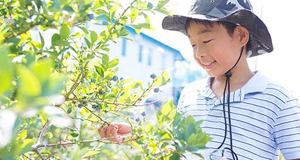 子どもと収穫を楽しむガーデン
