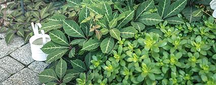 BASIC 他を魅力的に引き立てるベーシックな植物たち。
