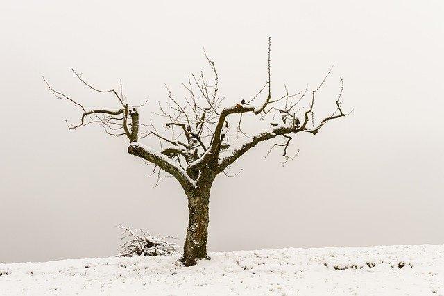 tree-3244491_640